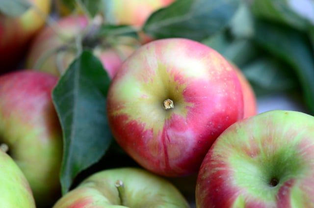 Honeycrisp apples, Maureen Abood