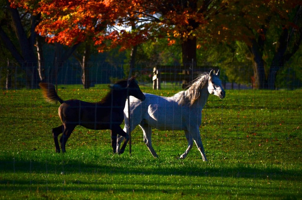 Horse Farm MSU, Maureen Abood