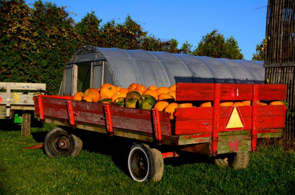Pumpkin wagon MSU, Maureen Abood