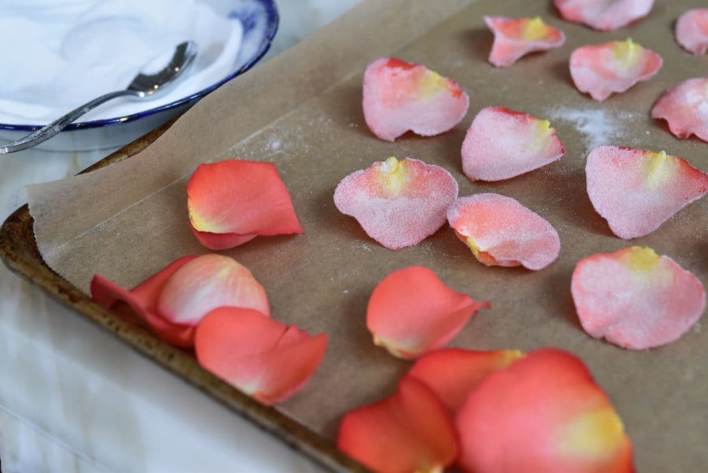 Fresh and sugared rose petals on a sheet pan, with a bowl of sugar off to the side