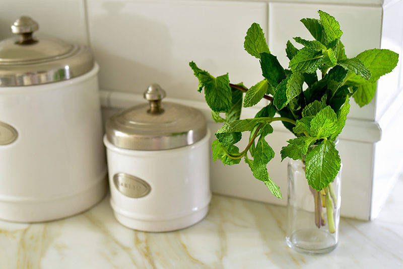 Fresh mint in a vase on the counter